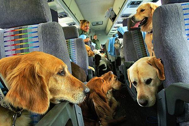 Pet Relocation - Moving pets abroad