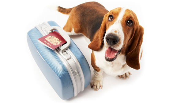 Relocating Abroad with Pets